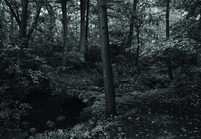 Realism in Nature's Garden