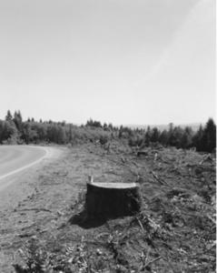 A tree stump alongside a road