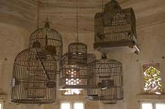 Caged Bird Society