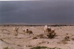 Animals in Cape Verde