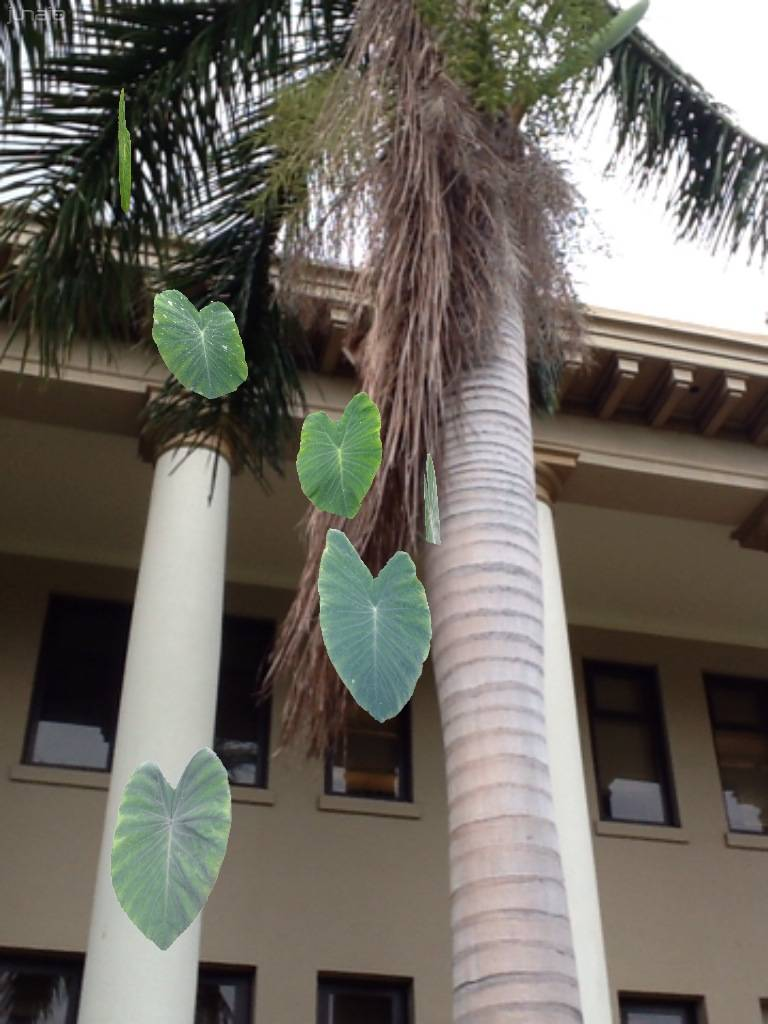Trees by coconut palms.