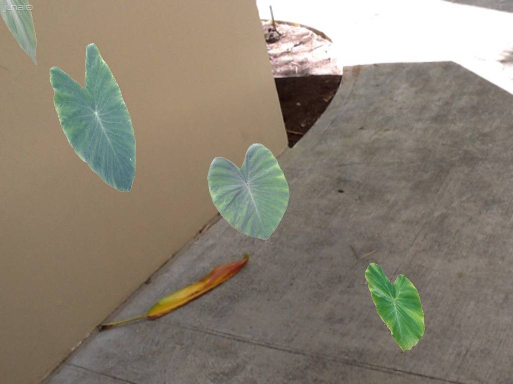 Leaves by foundation of building.