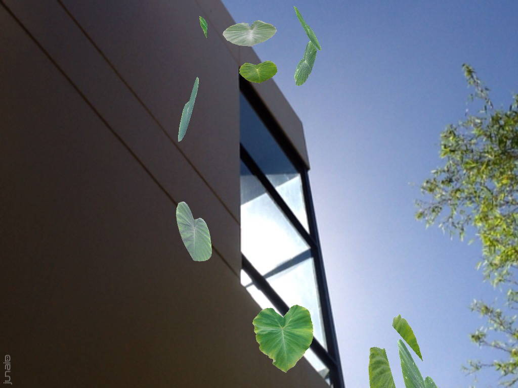 Leaves by studio walls.