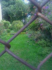 A green garden viewed through a fence