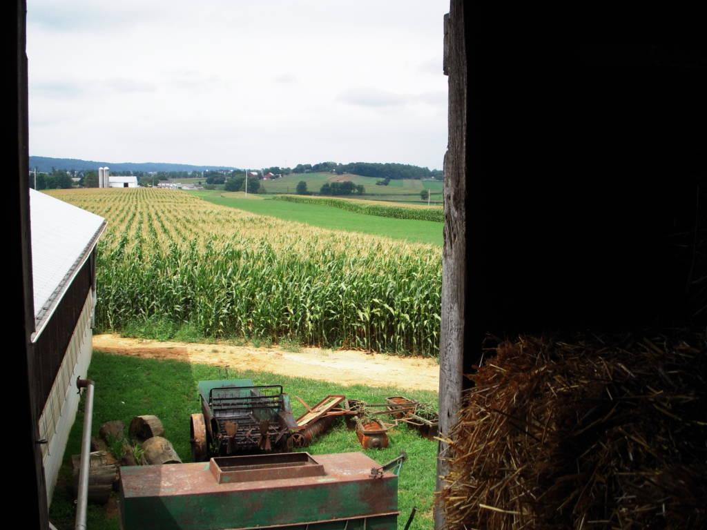 cornfield and tractor