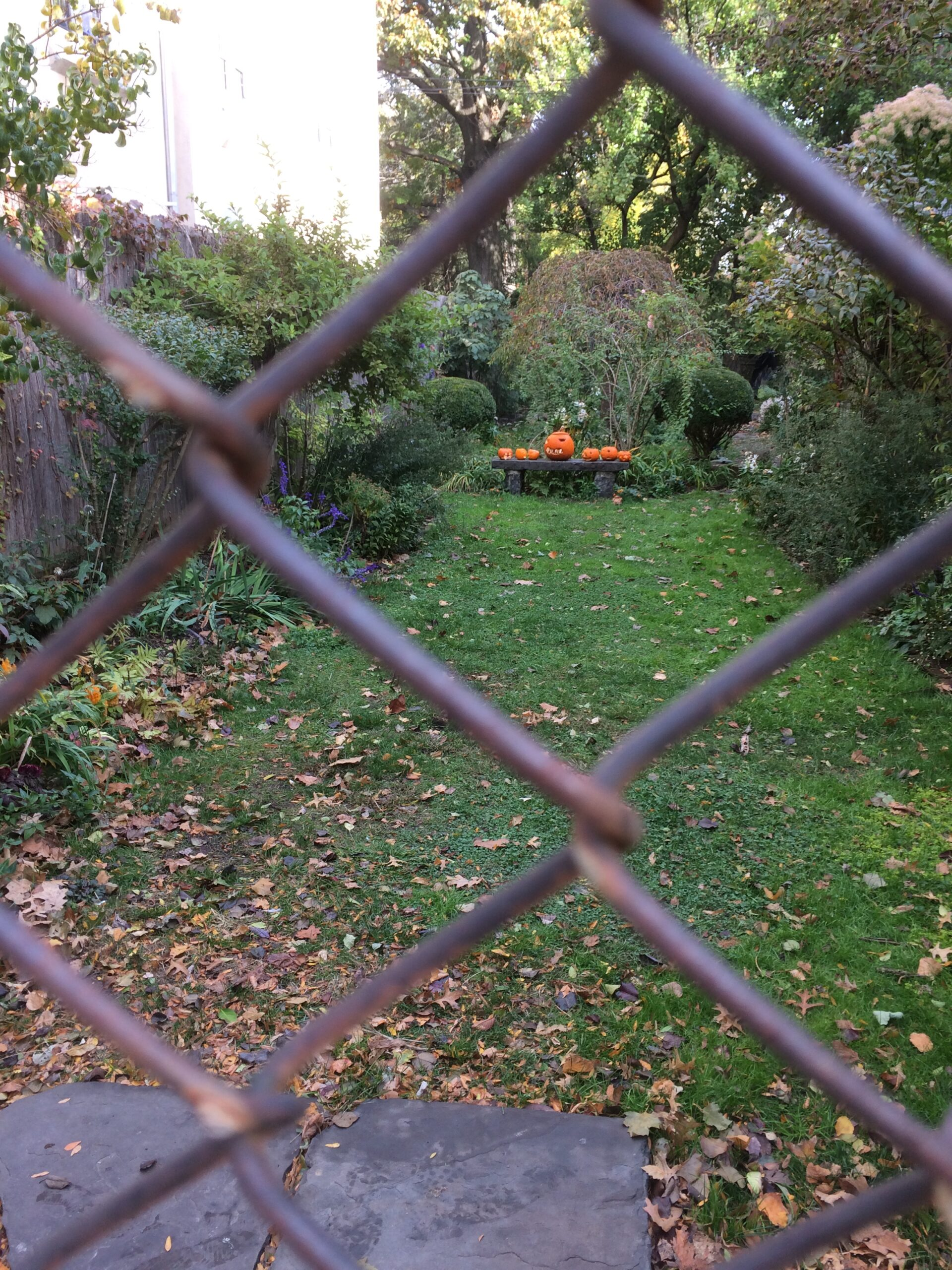 Garden viewed through a fence