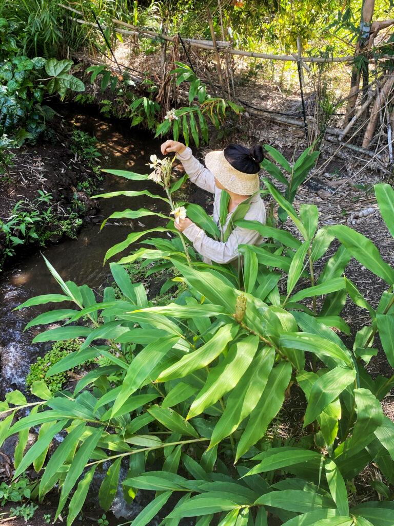 Woman examines leaf