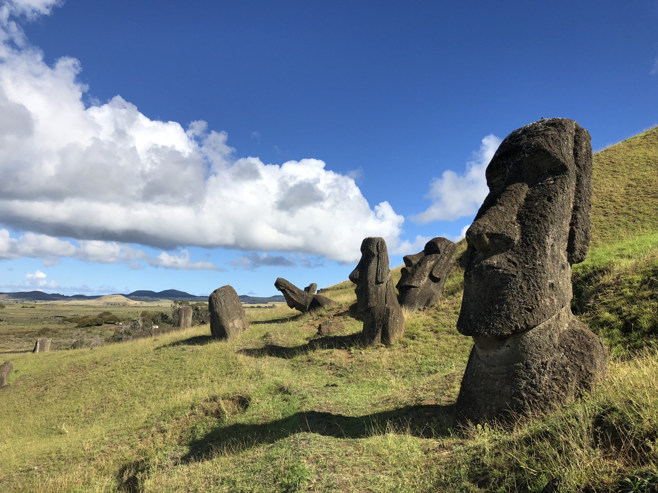 Image of Moai statues in a field.